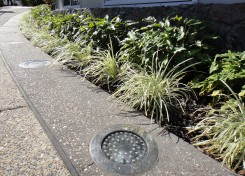 Recent commercial landscape design projects on the Sunshine Coast